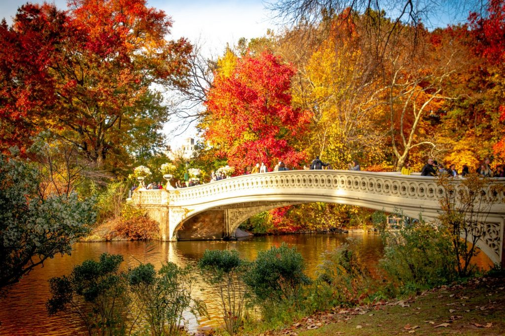 Central park in New York City in Autumn. A variety of oranges and red dominate the tree line, the perfect backdrop to the water and bridge with tourists crossing in their droves.